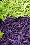 Grüne und purpurrote Bohnen Stockfoto