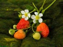 Grüne und rote Erdbeeren Lizenzfreie Stockfotos