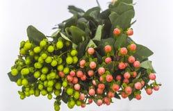 Grüne und rote hollies stockfotografie