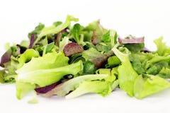 Grüne und rote Kopfsalatblätter Lizenzfreies Stockbild
