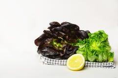 Grüne und rote Kopfsalatköpfe Stockbild