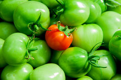 Grüne und rote Tomaten Lizenzfreies Stockbild