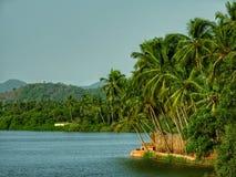 Grüne und saubere Natur im Monsun stockbild