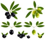 Grüne und schwarze Oliven mit Blättern. Lizenzfreie Stockfotos