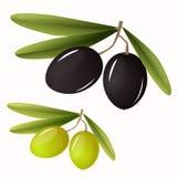 Grüne und schwarze Oliven mit Blättern Stock Abbildung