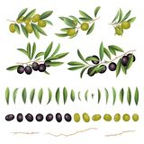 Grüne und schwarze Oliven mit Blättern und Niederlassungssammlung Auch im corel abgehobenen Betrag lizenzfreie abbildung