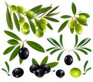 Oliven mit Blättern Lizenzfreie Stockfotos