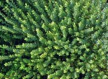 Grüne Vegetation Lizenzfreies Stockfoto