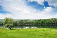 Grüne Vegetation auf den Flussquerneigungen Stockbild