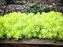 Grüne Vegetation im Garten Stockbild