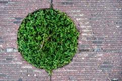 Grüne Vegetation zwischen Straßenplatten Stockbild