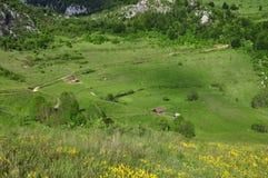 Grüne vibrierende Weide Stockfoto