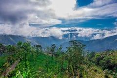 Grüne Wälder mit blauem Himmel und Wolken stockbild