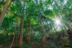 Grüne Wälder und Natur Lizenzfreies Stockfoto