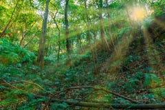 Grüne Wälder und Natur auf den Bergen Stockbild