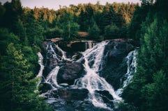 Grüne Waldlandschaft stockfotografie