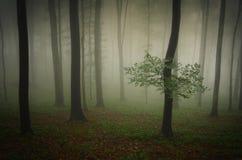 Grüne Waldnatur mit Bäumen und Nebel Stockbild