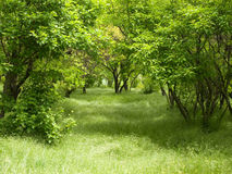 Grüne Waldung. lizenzfreie stockbilder