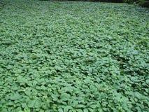 Grüne Waldung Stockfotografie