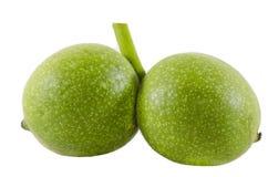 Grüne Walnuss lokalisiert auf weißem Hintergrund Lizenzfreie Stockfotografie