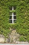 Grüne Wand Stockfoto