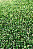 Grüne Wand Lizenzfreie Stockfotografie