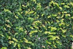 Grüne Wand Lizenzfreie Abbildung