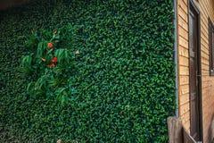 Grüne Wand für Isolierungstechnologie ECO-Holzhauses im Freien Lizenzfreie Stockbilder
