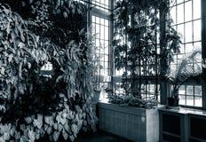 Grüne Wand in Howard Peters Rawlings Conservatory lizenzfreie stockbilder