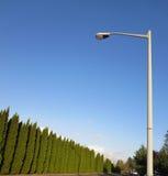 Grüne Wand von Bäumen und von Laternenpfahl Stockfotografie