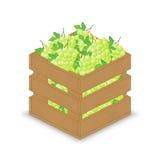 Grüne weiße Trauben in der hölzernen Kiste Stock Abbildung