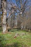 Grüne Weide des Frühlinges Lizenzfreie Stockbilder