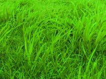 Grüne Weiden Lizenzfreies Stockfoto