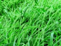 Grüne Weiden Lizenzfreies Stockbild