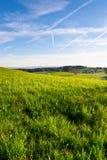 Grüne Weiden Lizenzfreie Stockbilder