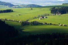 Grüne Weiden Lizenzfreie Stockfotos