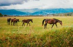 Grüne Weiden der Pferdenbauernhöfe Stute mit Fohlen Lizenzfreie Stockbilder
