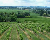 Grüne Weinkellereiansicht stockfoto