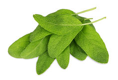 Grüne weise Blätter lizenzfreies stockbild