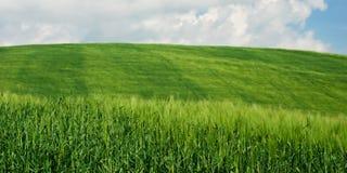 Grüne Weizenfelder Lizenzfreies Stockfoto