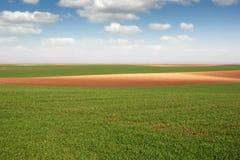 Grüne Weizenweidelandschaftsfrühlings-saison Lizenzfreie Stockfotos