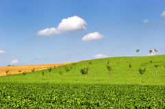 Grüne Wiese. Lizenzfreie Stockbilder