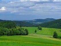 Grüne Wiese lizenzfreies stockfoto