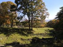 Grüne Wiese der goldenen Blätter des Herbstes lizenzfreies stockfoto