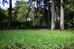 Grüne Wiese in einem Park, bokeh Hintergrund, Tapete Lizenzfreie Stockbilder