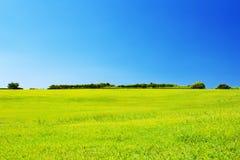 Grüne Wiese gegen klaren blauen Himmel Stockfotos