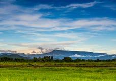 Grüne Wiese im blauen Himmel Stockfotografie