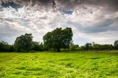 Grüne Wiese im Sommer Lizenzfreies Stockfoto