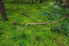 Grüne Wiese im Wald Lizenzfreie Stockbilder