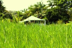 Grüne Wiese, Maui Lizenzfreie Stockfotos